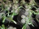 bridal-bouquets-29