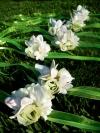 bridal-bouquets-62